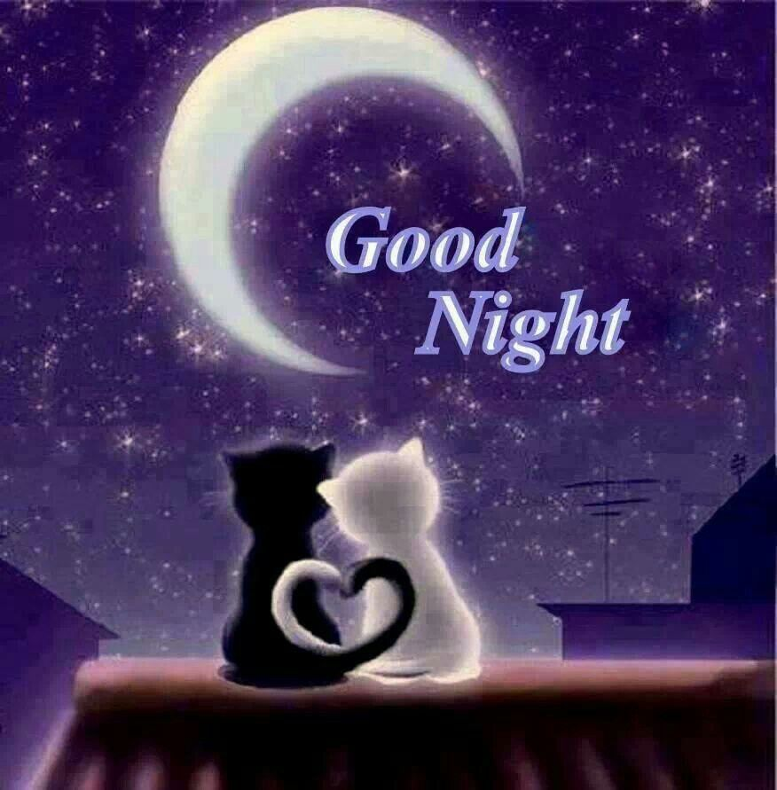 Night Time Quotes: Thank You What You Were With Me. Good Night, My Dears