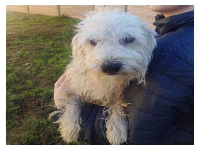 Wally Id A018157 I Am A Male Cream Tibetan Terrier Mix My Age