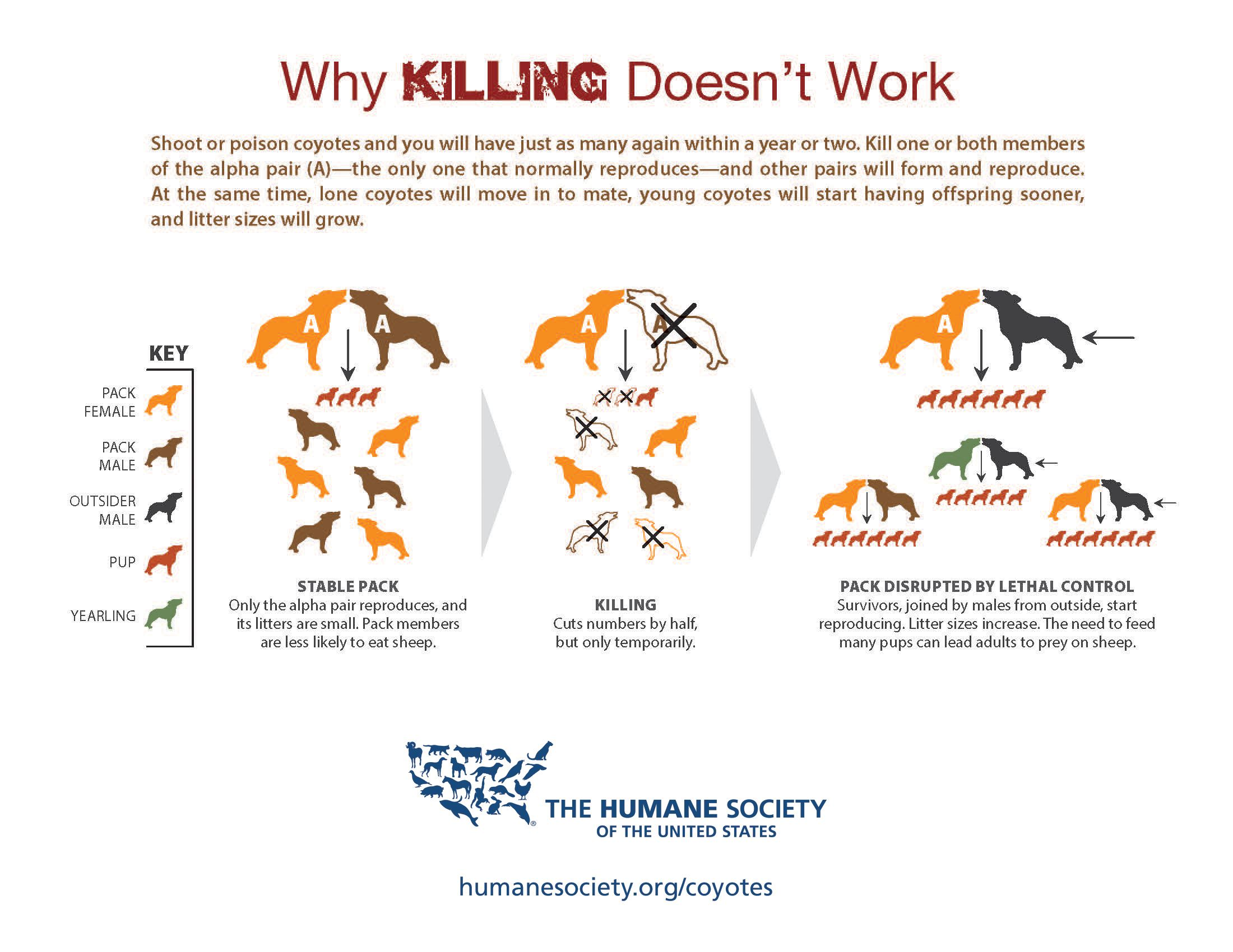 Why Killing Coyotes Doesn't Work : The Humane Society of the United States