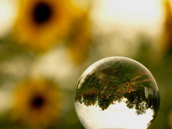 Notecard Gazing Ball Sunflowers by kelleygirlimages on Etsy, $3.50