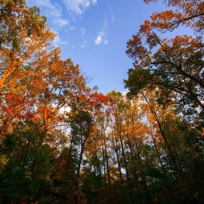 Fall foliage in Will's  backyard
