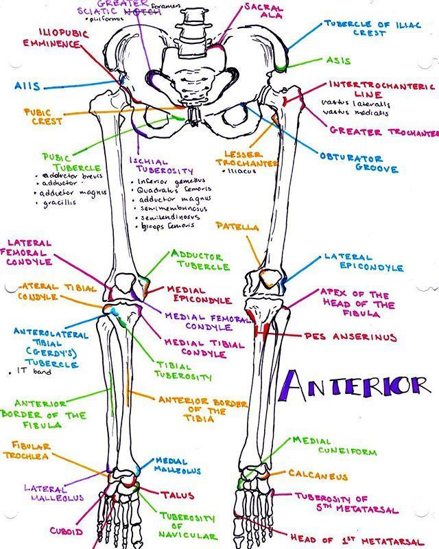 Bonesies   ~Medicine~   Pinterest   Para estudiar, Anatomía y Enfermería