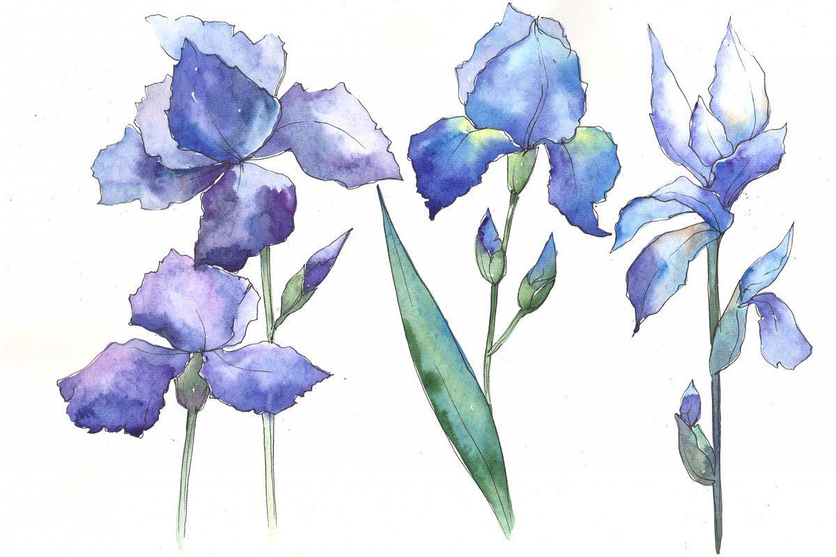 Watercolor Blue Irises Flowers Png Set 95195 Illustrations Design Bundles Blue Iris Flowers Iris Flowers Botanical Flowers