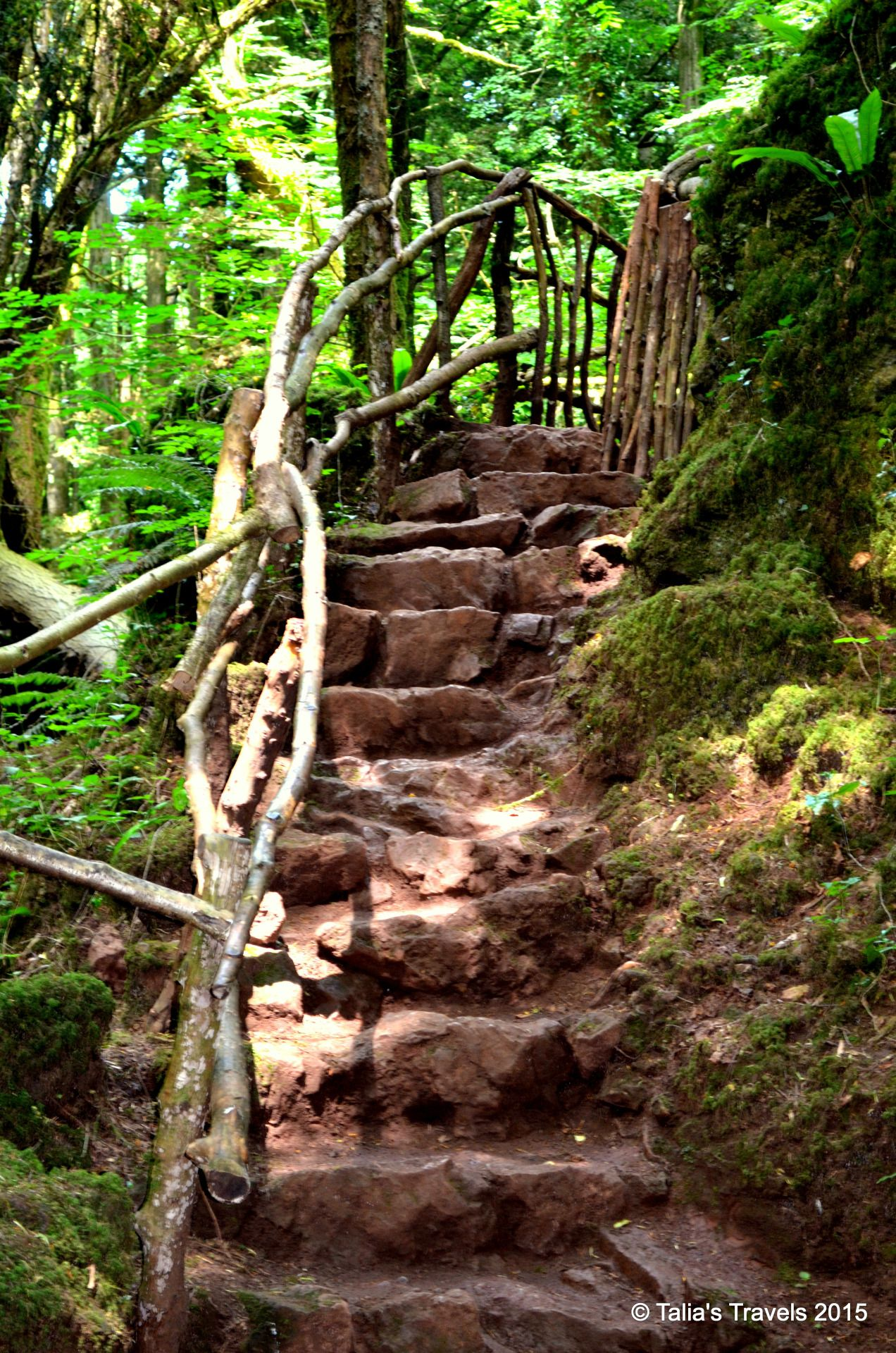 Talia's Travels | Puzzlewood, Forest of Dean, Gloucestershire, England