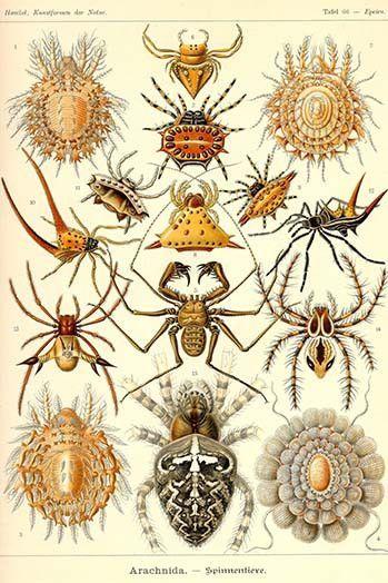 Spiders | Insectos, Araña y Anatomía animal