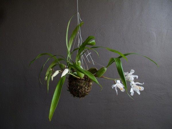 Blumenampel' Selber Machen | Zimmerpflanzen | Pinterest | Deko Und ... Blumenampel Selber Machen Hangekorb