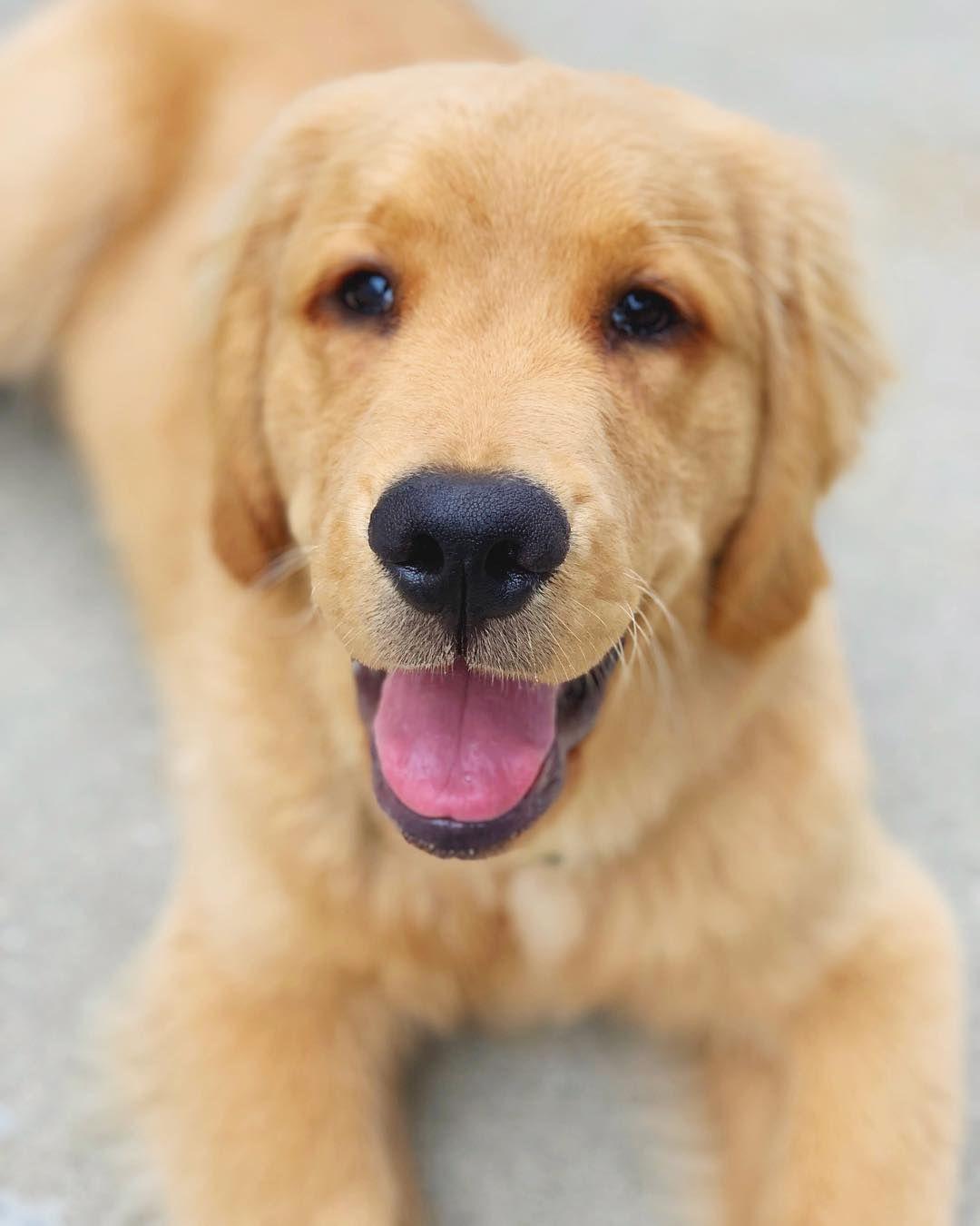 Tucker Bear On Instagram A Super Happy Puppy After Tucker
