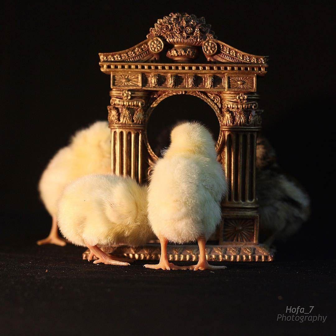 تعريف كلمة كــيوت ㅤ نصيحة اليوم لاتقوموا بتربية شيء قابل للأكل زمان ربيت نوع من الطيور في المزرعه وفي يوم جمعه حزين ارسلوني Eiffel Tower Photo Landmarks