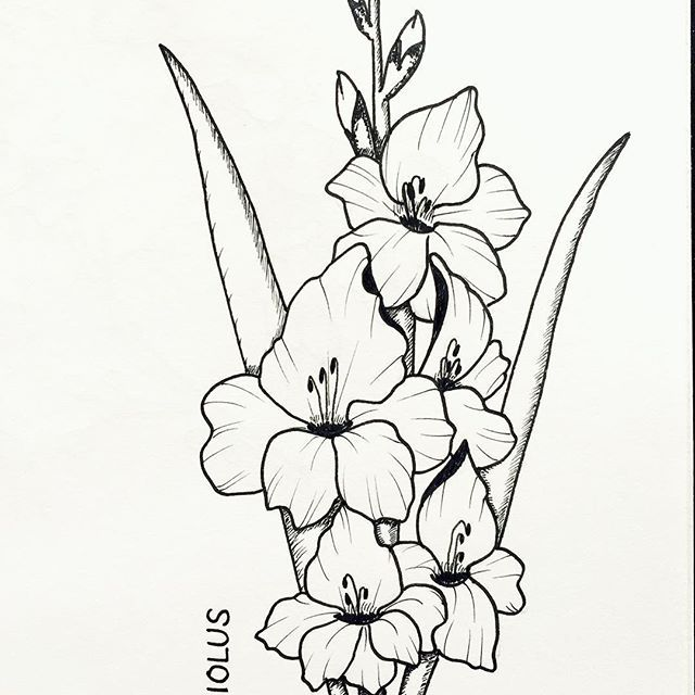 Handdrawn Drawing Florals Botanical Gladiolus My Drawings Drawings How To Draw Hands