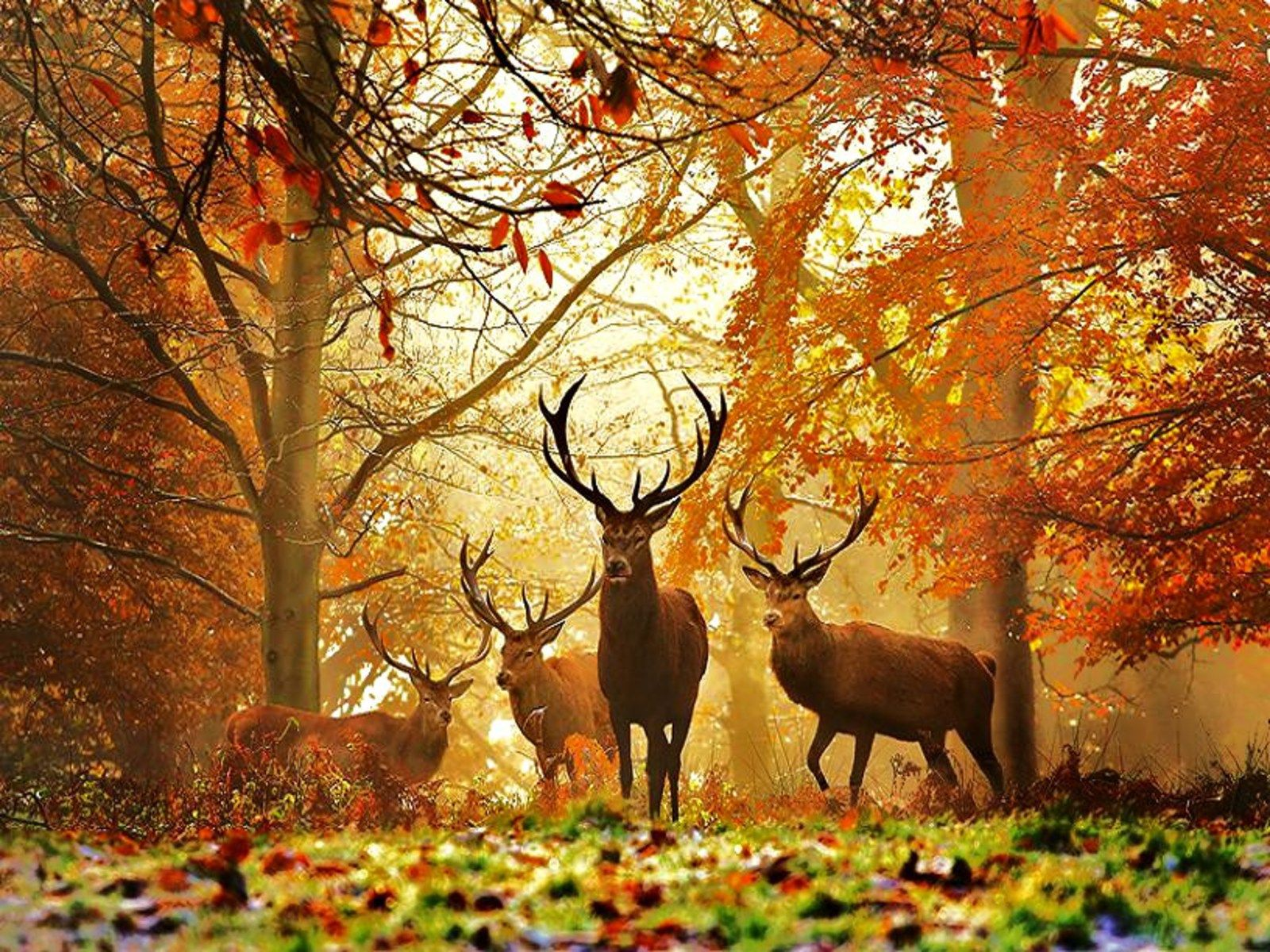 Deer Hunting Wallpapers Best Collection Of Deer Wallpapers by Jitesh