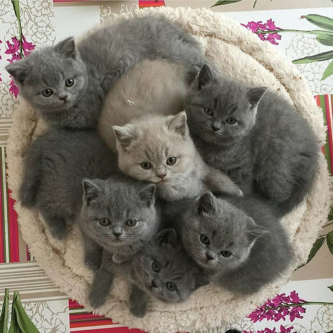 How many kittens do you have? Follow petzcious . . .