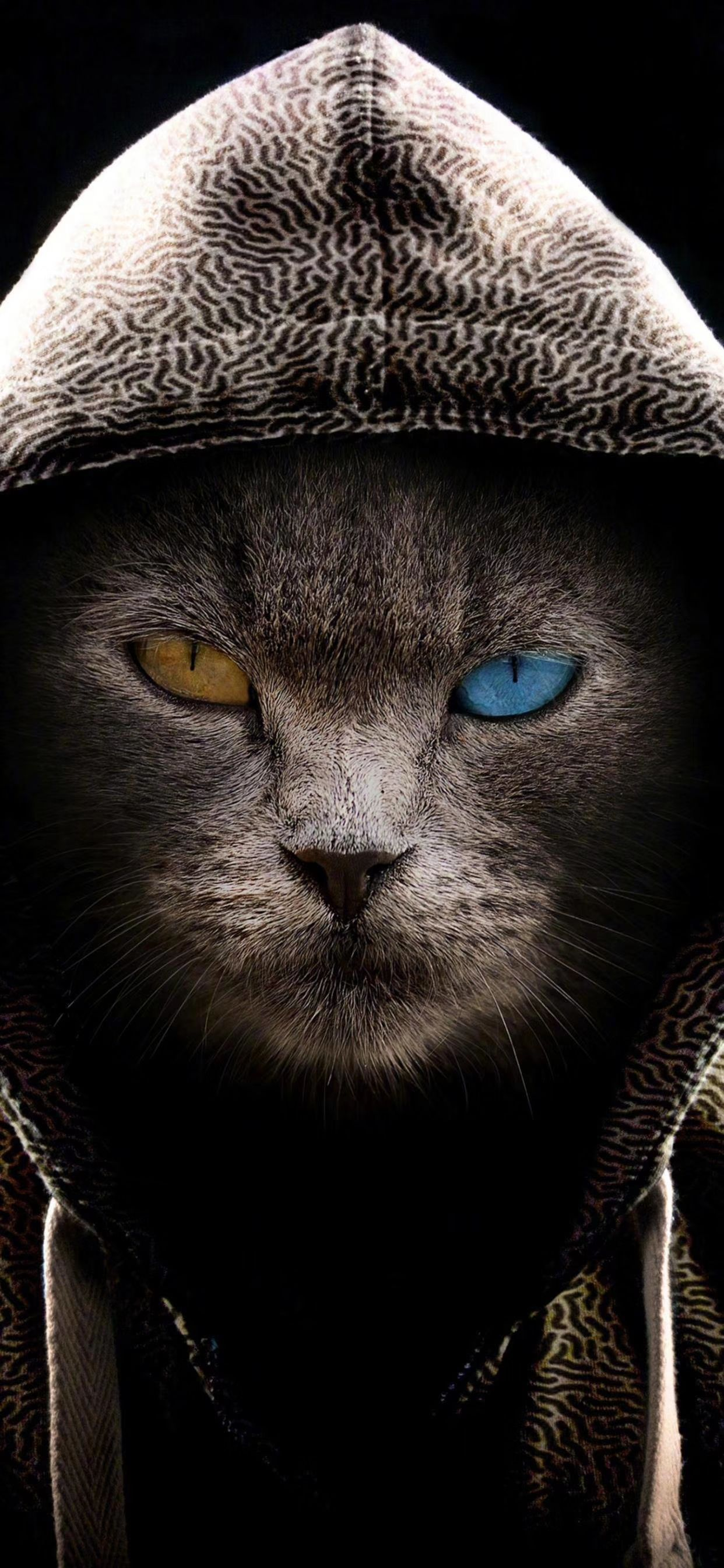 Cat Wallpaper Gatos Animales De Anime Fotos Con Gatos