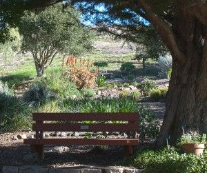 San Luis Obispo Botanical Garden   Tucked Away In El Chorro Regional Park,  This Botanical