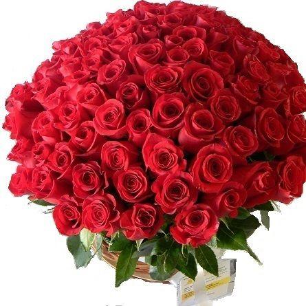 Las Flores Mas Lindas Del Mundo Fotos Buscar Con Google