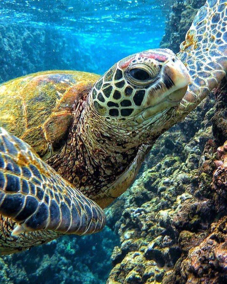 schildkröten  turtles  sea turtle images tortoise
