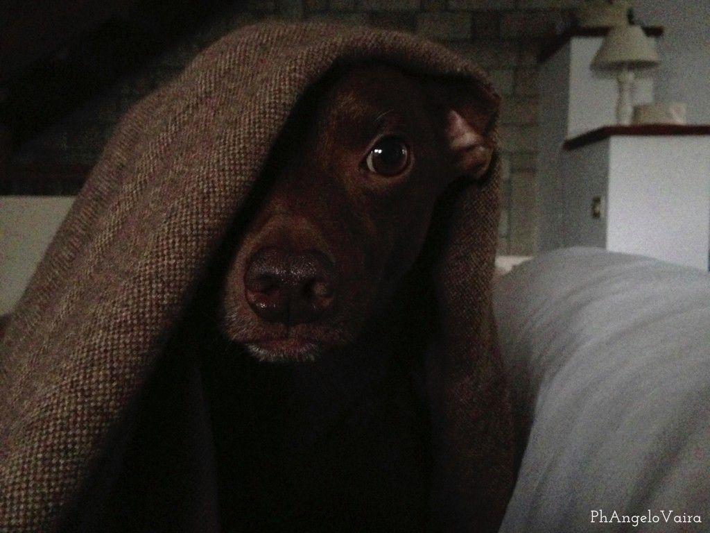 È giusto tenere il nostro cane sul divano o sul letto? Quanto compromettiamo la sua educazione? Non si sentirà il capo branco?