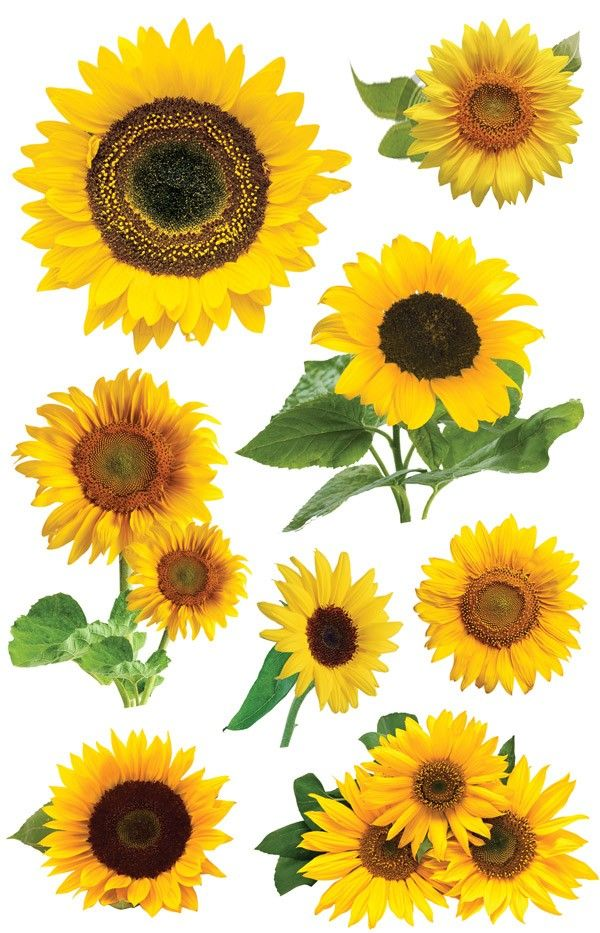 Sticko Stickers Sunflowers 015586614275