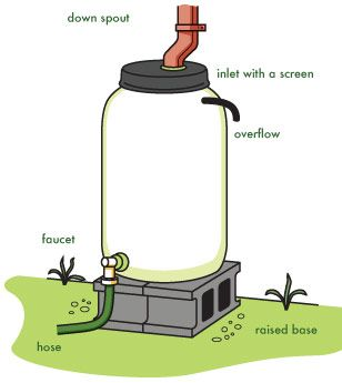 A few ideas to protect and conserve water.