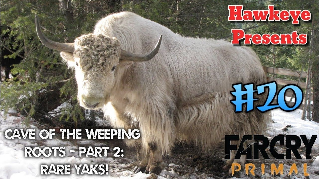 Far Cry Primal 20 Cave Of The Weeping Roots Part 2 Rare Yaks Far Cry Primal Weeping Primal