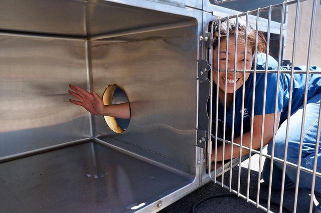 Dr  Cristie Kamiya reaches through a newly cut portal hole at San