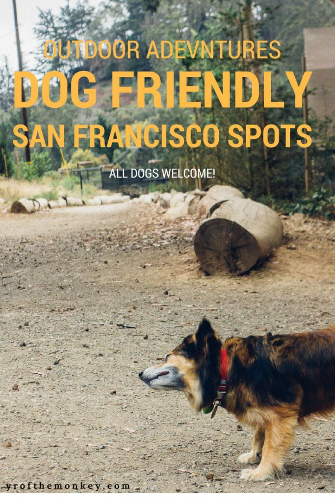 Dog Friendly San Francisco Spots A Resident Dog Mom S Guide Dog