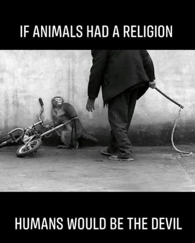 Sad What People Do To Animals At Times Experiments Trophies
