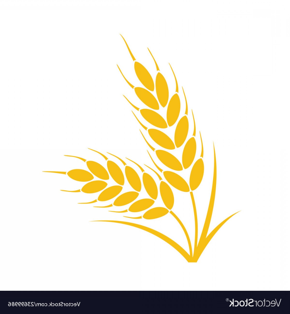 Bunch Of Wheat Or Rye Ears With Whole Grain Vector Soidergi Flower Clipart Wheat Vector Symbol Design