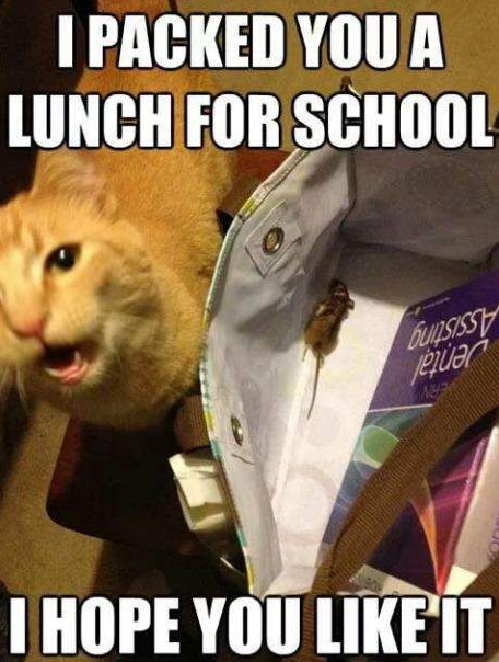 I Packed You Lunch For School I Hope You Like It Cat Cats Cats Photos Funny Cats Funny Cat Funny Phot Funny Cat Memes Cute Funny Animals Funny Cats