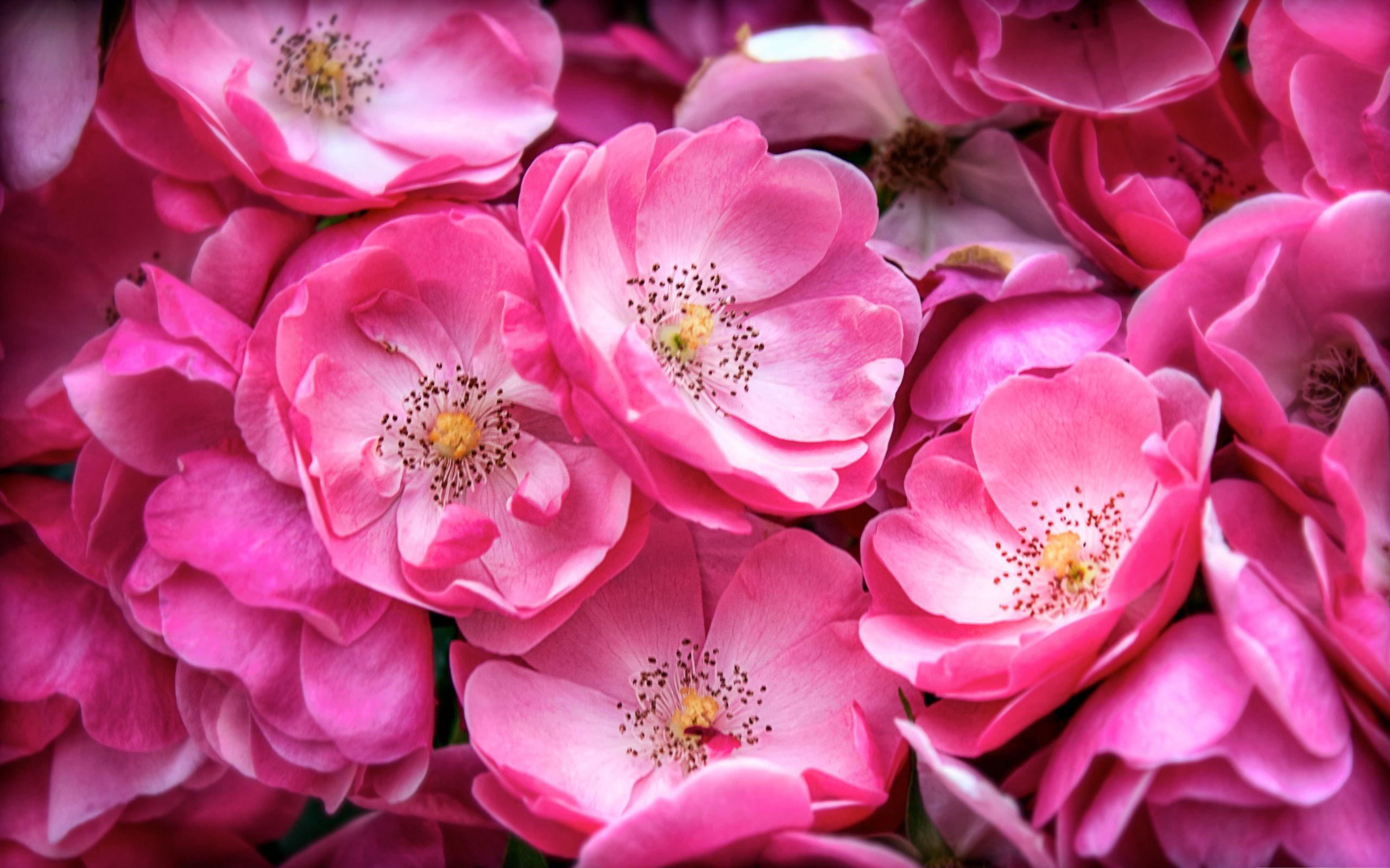 Hot pink flower background flowers pinterest flowers and hot pink flower background mightylinksfo