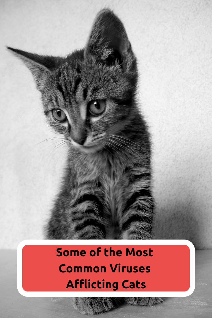Most Common Viruses In Cats Litter Box Cats Feline Distemper