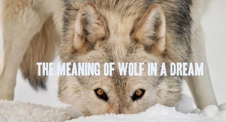 White Wolf The Meaning Of Wolf In A Dream Majestic Wolves
