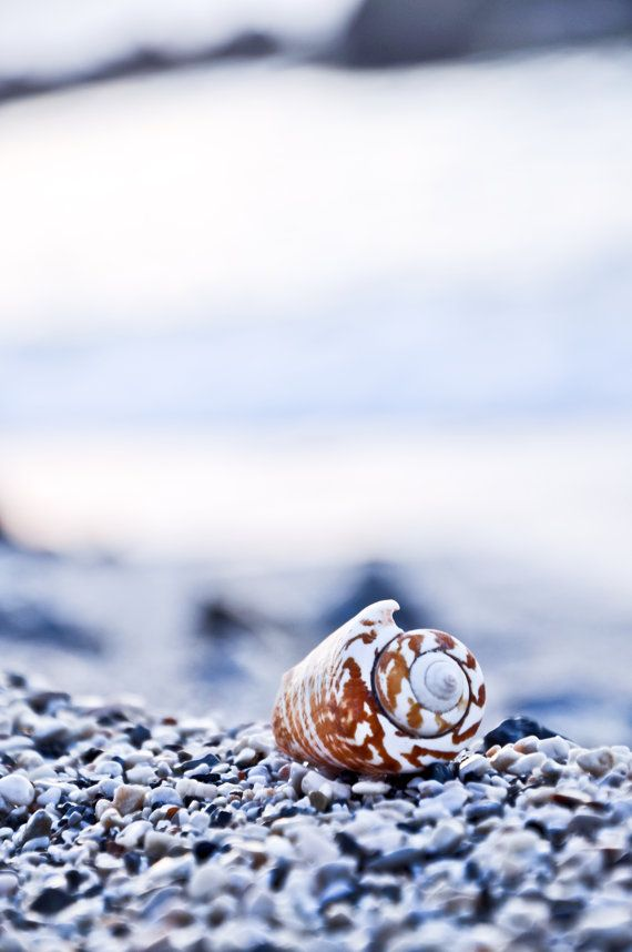Seashell photo on canvas. Photograph of shell printed by SquoSquo, $25.00