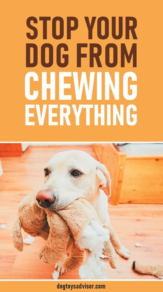 How to Stop Your Dog from Chewing Everything in Sight