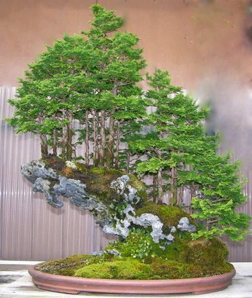 ~ Saikei ~ Stunning! ~ www.abcdobonsai.com this is really cool--how wonderful to enjoy this every day!
