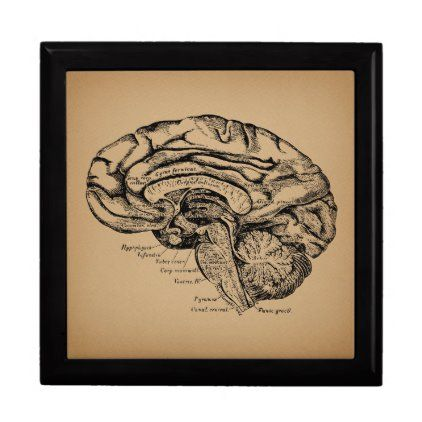 Vintage Brain Diagram Antique Medical Anatomy Art Gift Box ...