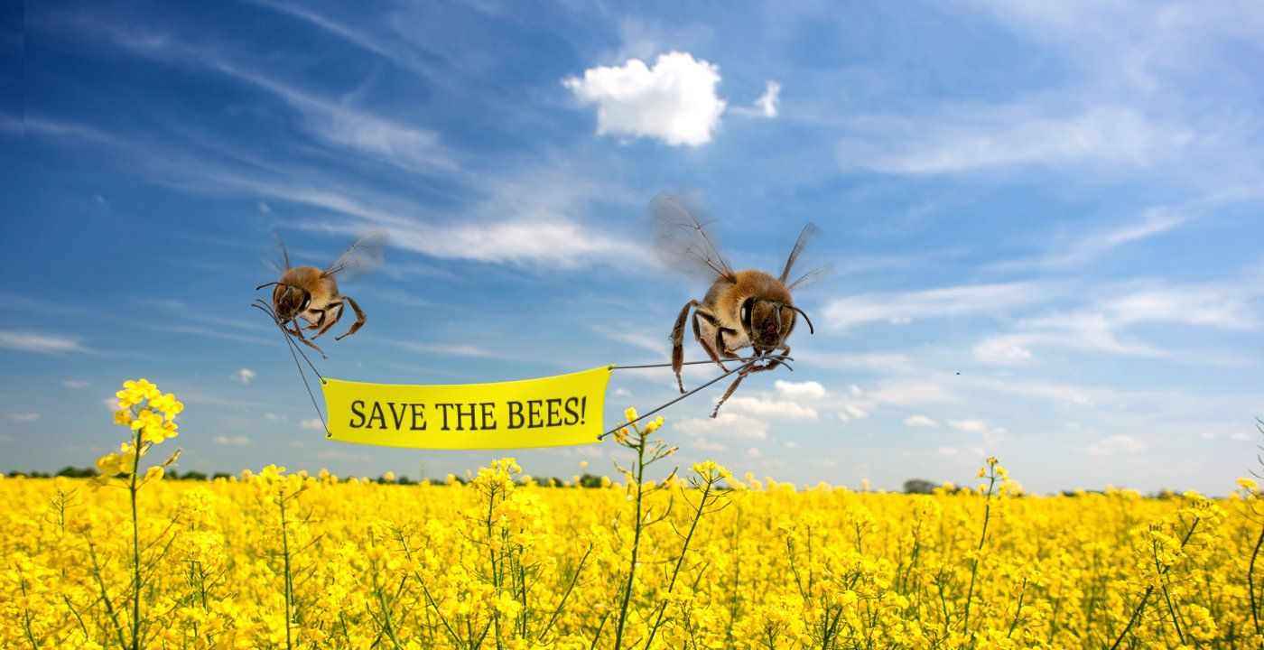 Blog Post - Why are the bees disappearing and how can we help save them?