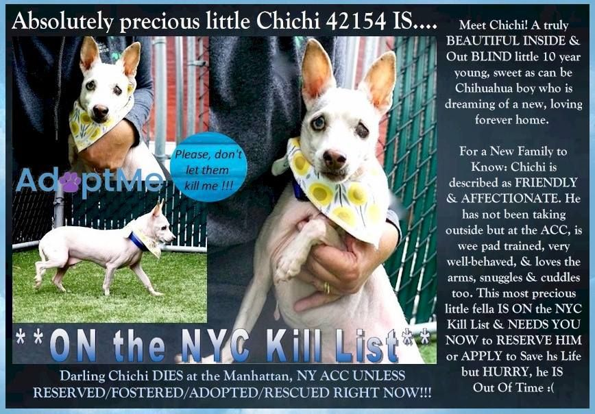 Newyork And Ne States On Kill List For Sept 27 2018 Please Foster Adopt Share To Save This Pup Https Www Face Nyc Dogs York Dog Staten Island New York