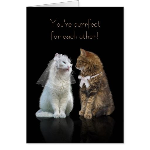 Wedding Gifts For Dog Lovers: Wedding / Engagement Congratulation For Cat Lovers Card
