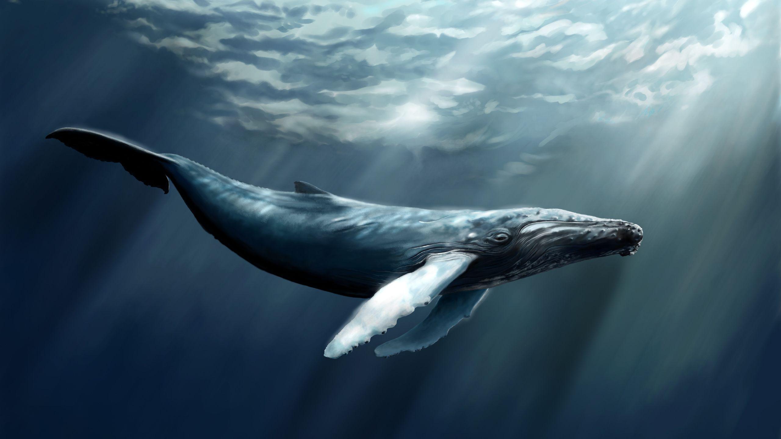 Humpback Whale Desktop Wallpaper Whale Artwork Whale Humpback Whale
