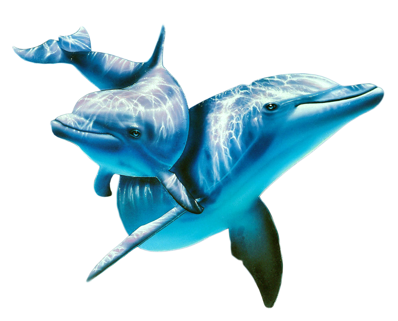 Dolphin In Sea Images Dolphins, Dolphin logo, Whale
