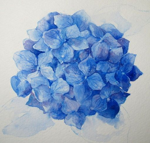 how to draw hydrangeas step by step