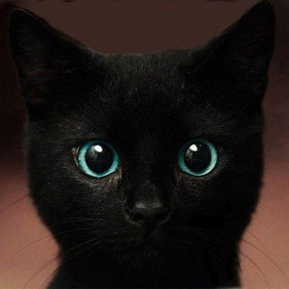 Black cat / Great gift for anyone who loves cats / Beautiful eyes / Art adhered to wood or print to frame yourself / Made in the USA