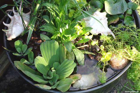 Mini-Teich bepflanzen: attraktiv für Balkon, Terrasse, kleine Gärten