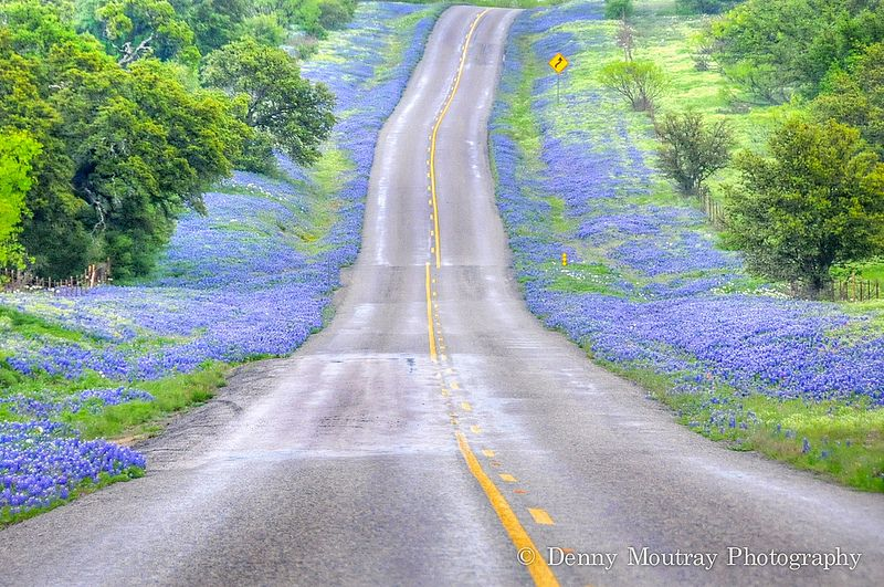 Wildflower Road / Spring in the Texas Hill Country - What can I say that this image doesn't? Taken on a rainy morning near Castell, Texas. This road is one of the most beautiful to drive during wildflower time.