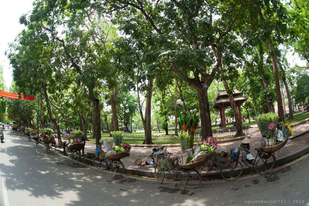 https://flic.kr/p/bX8rFG | Hoa trên phố | Mùa này HN thật đẹp. Lá cây cứ xanh mướt. Rồi hoa Sấu rụng với hoa Sen đến muà. Thật Tuyệt Hà Nội 12.5.2012