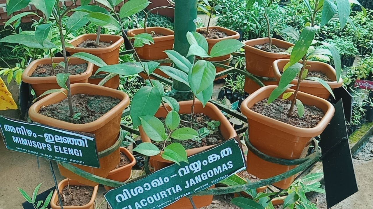 Fruits Gardens Kerala Medicinal nursery plants