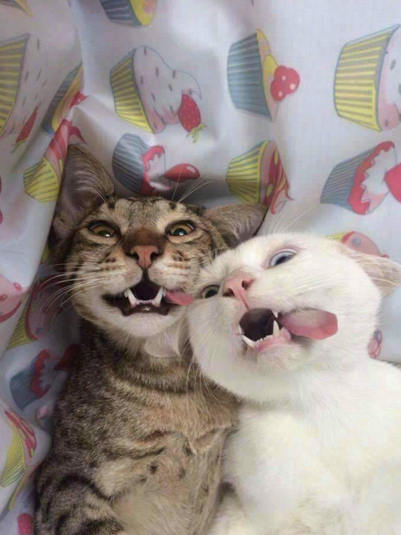 Pin By Kat Rocker On Cat Cute Cats Crazy Cats Funny Animals