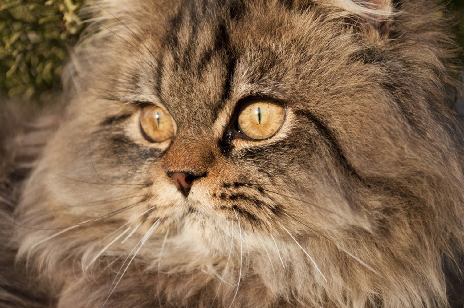 Why Do Cats Have Whiskers? Cats, Cat personalities