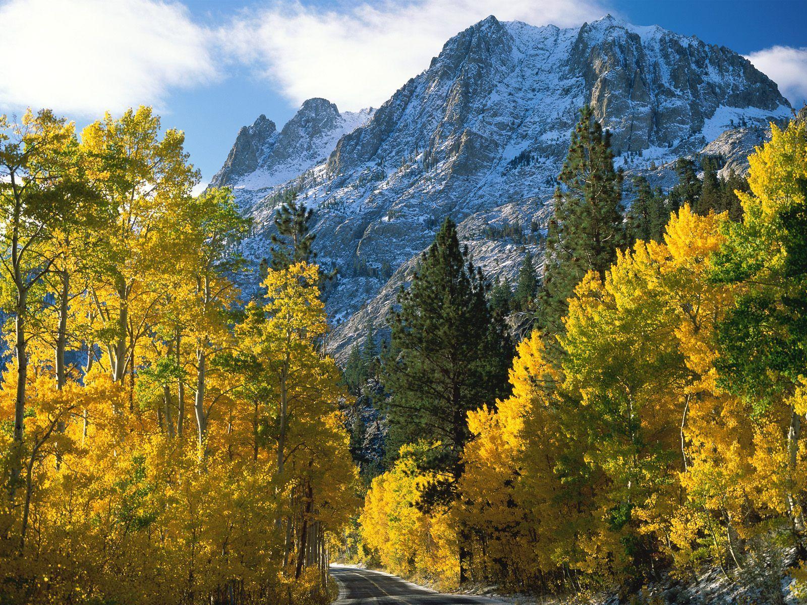 Fotos De Bosques Y Montañas - Buscar Con Google