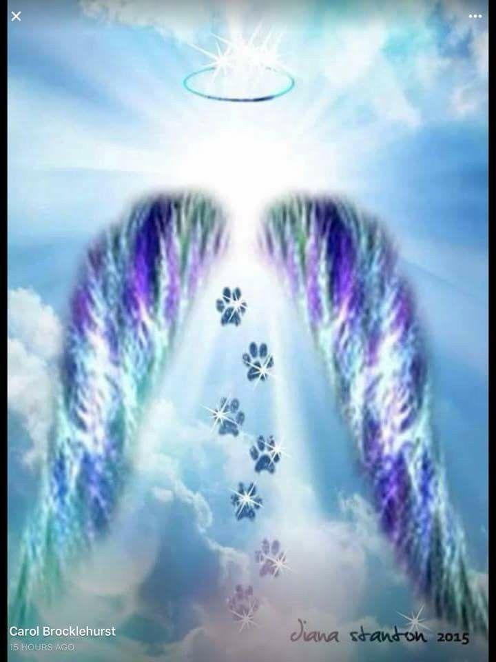 Pin de Karen Levin en ☆°○°☆The Rainbow Bridge☆°○°☆ | Pinterest ...